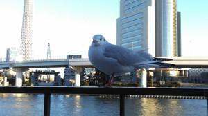 Tokyo_161230_0013